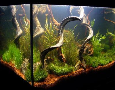 Bepflanzungsbeispiele Fur Aquarien