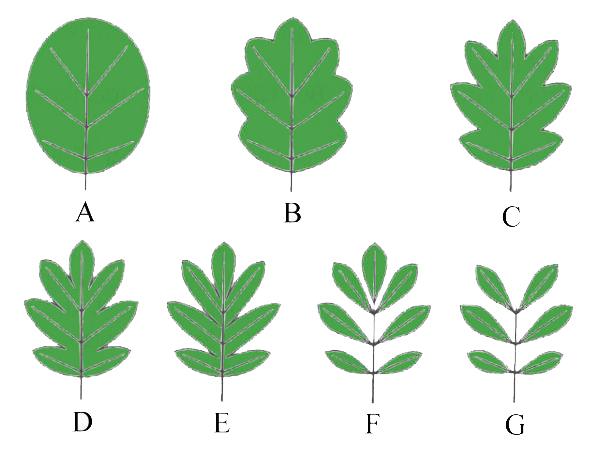 Bestimmungsmerkmale von Pflanzen