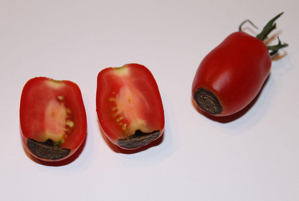 krankheiten bei tomaten krankheiten kategorie tomaten tomatl gr nkragen bei tomaten ursachen. Black Bedroom Furniture Sets. Home Design Ideas