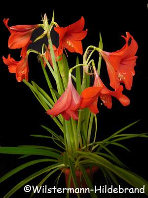 schaden sonnenblumen bei durchfall