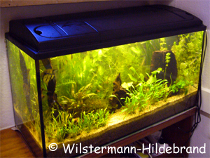 aquarium einrichten f r anf nger industrie schmutzwasser tauchpumpen. Black Bedroom Furniture Sets. Home Design Ideas