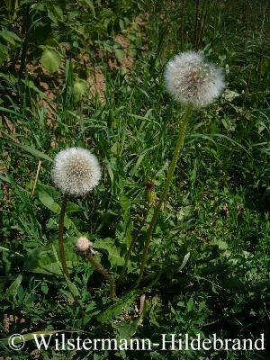 basilikum pflanze vermehren