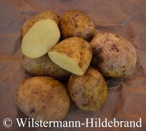 sehr frühe kartoffelsorten
